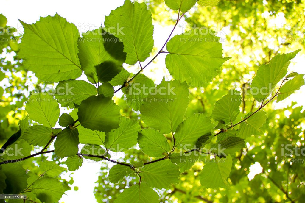 Mottled Leaf Background Pattern in Nature stock photo