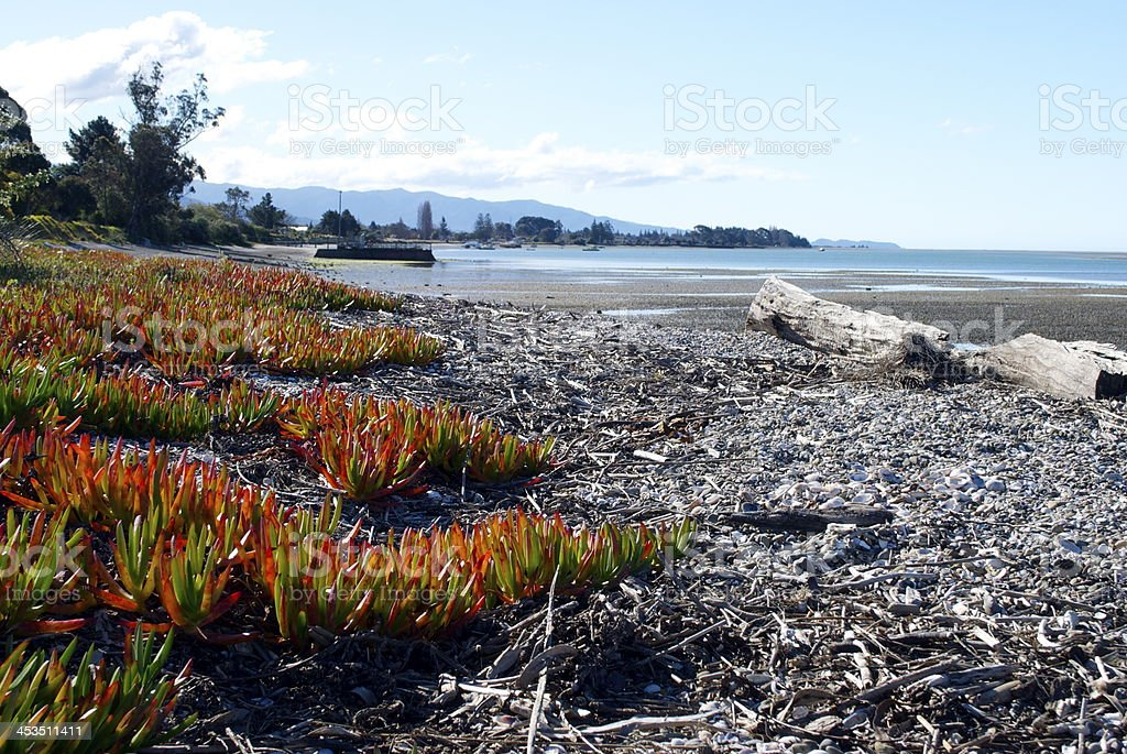 Motueka Seascape, Tasman Region, New Zealand stock photo