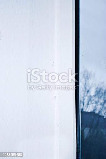 656168432 istock photo Mould colony growing on a house corner wall 1168959480