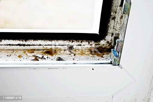 656168432 istock photo Mould colony growing on a house corner wall 1168961418