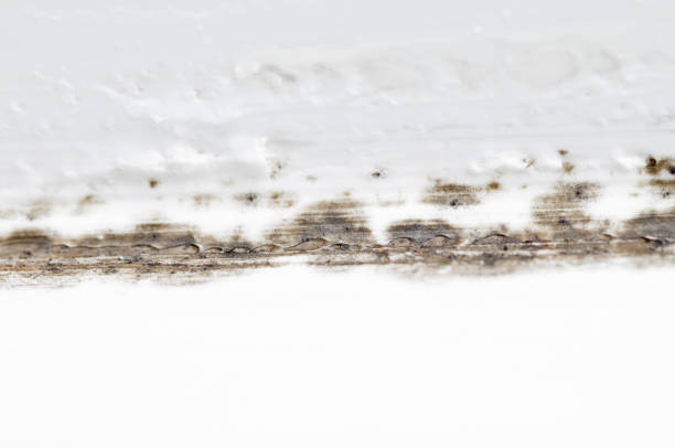 Mould In Bathroom stock photo
