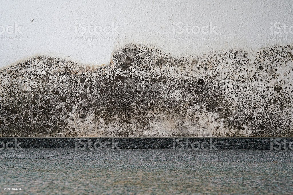mould stock photo