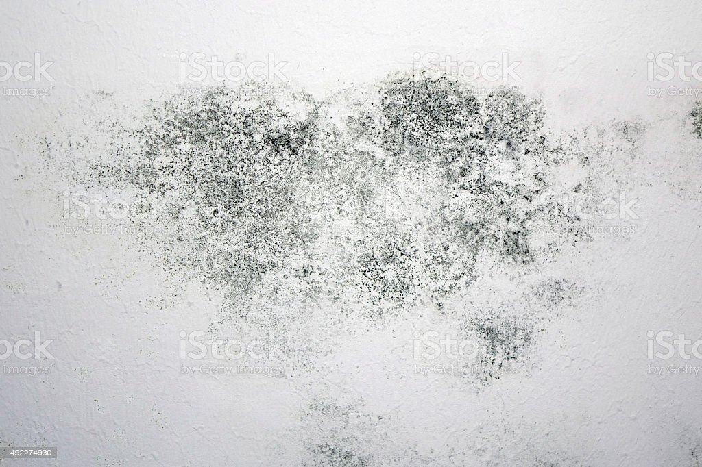 mould spot stock photo