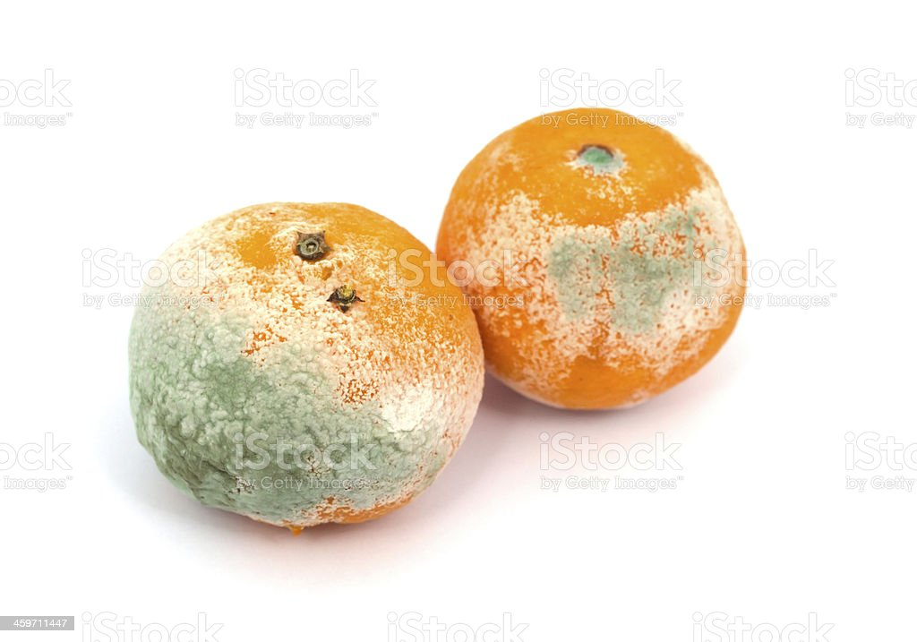 Mouldy Fruit royalty-free stock photo