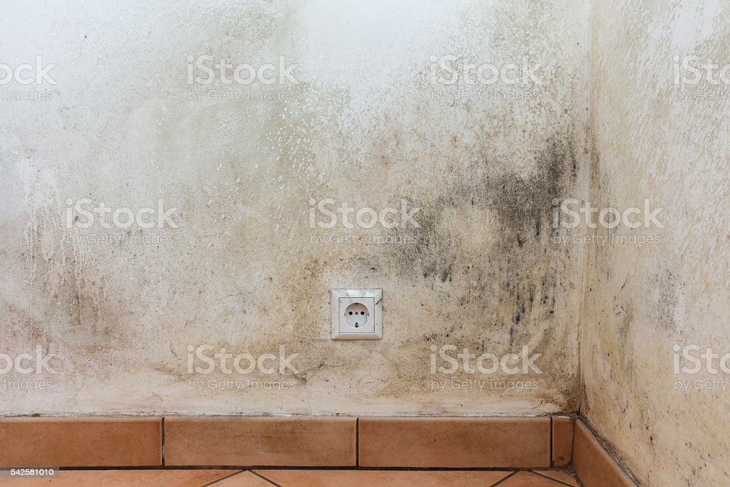 mouldy wall, mold stock photo