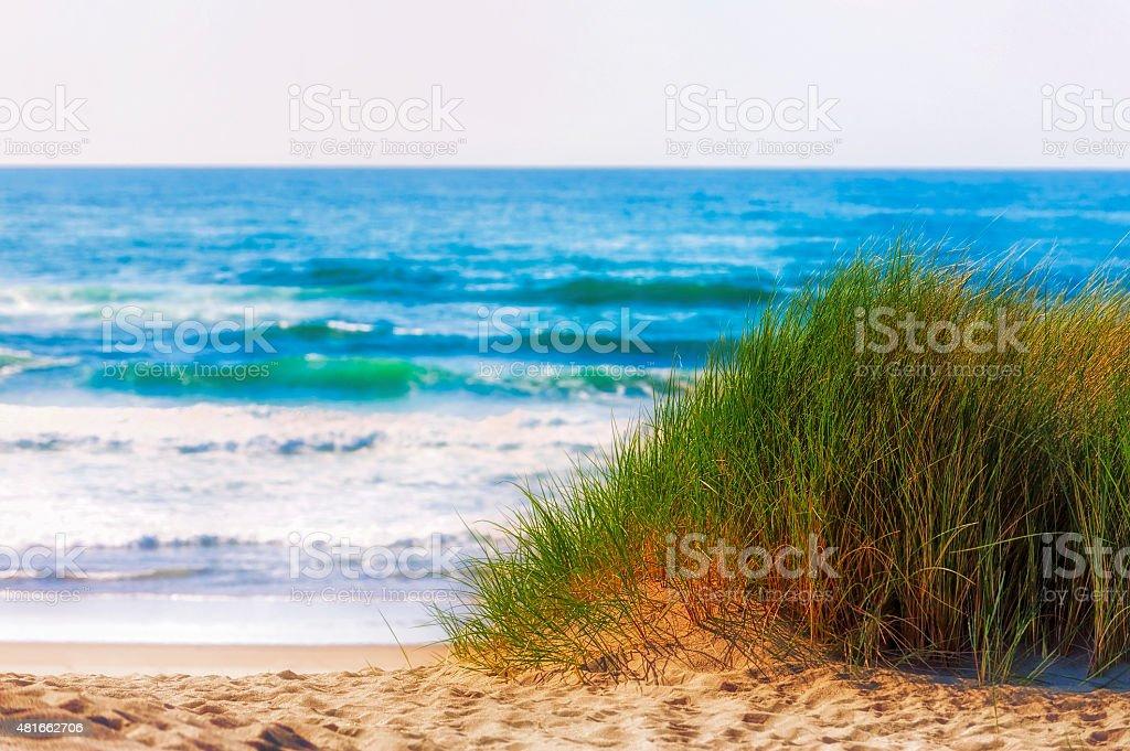 Mound of grass on sandy ocean beach stock photo