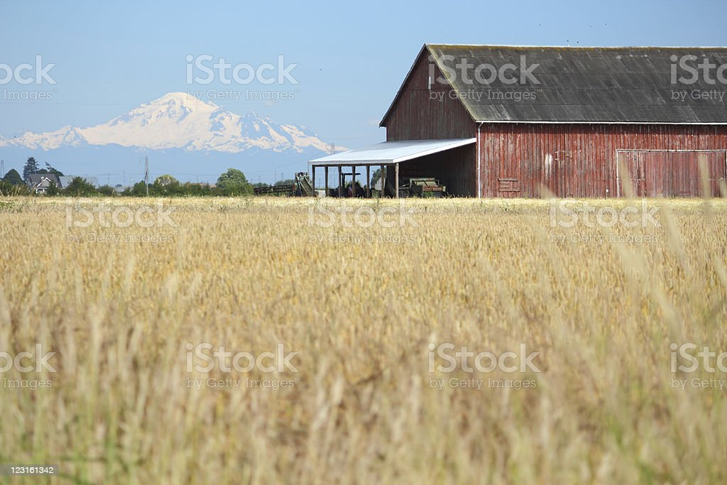 Mount Baker, Barn, Hay Field, royalty-free stock photo