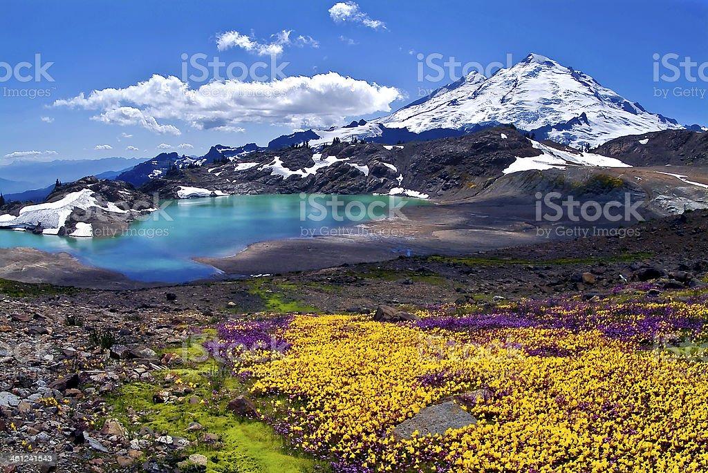 Mount Baker Summer stock photo