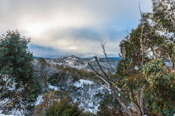 Mount Buffalo, winter view at the top of the snow mountain stock photo