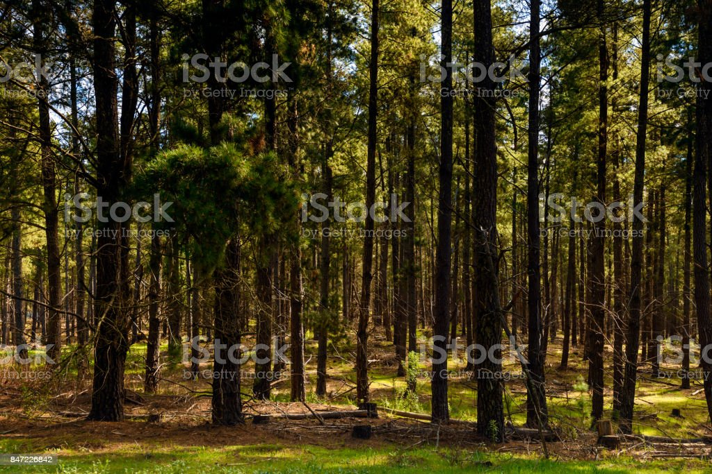 Mount Crawford Forest stock photo