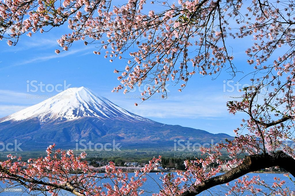 Mount Fuji and Cherry tree stock photo