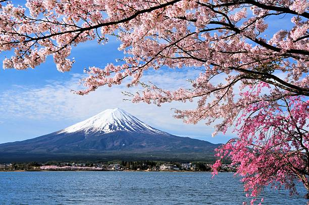 mount fuji and cherry tree - blossom stock pictures, royalty-free photos & images