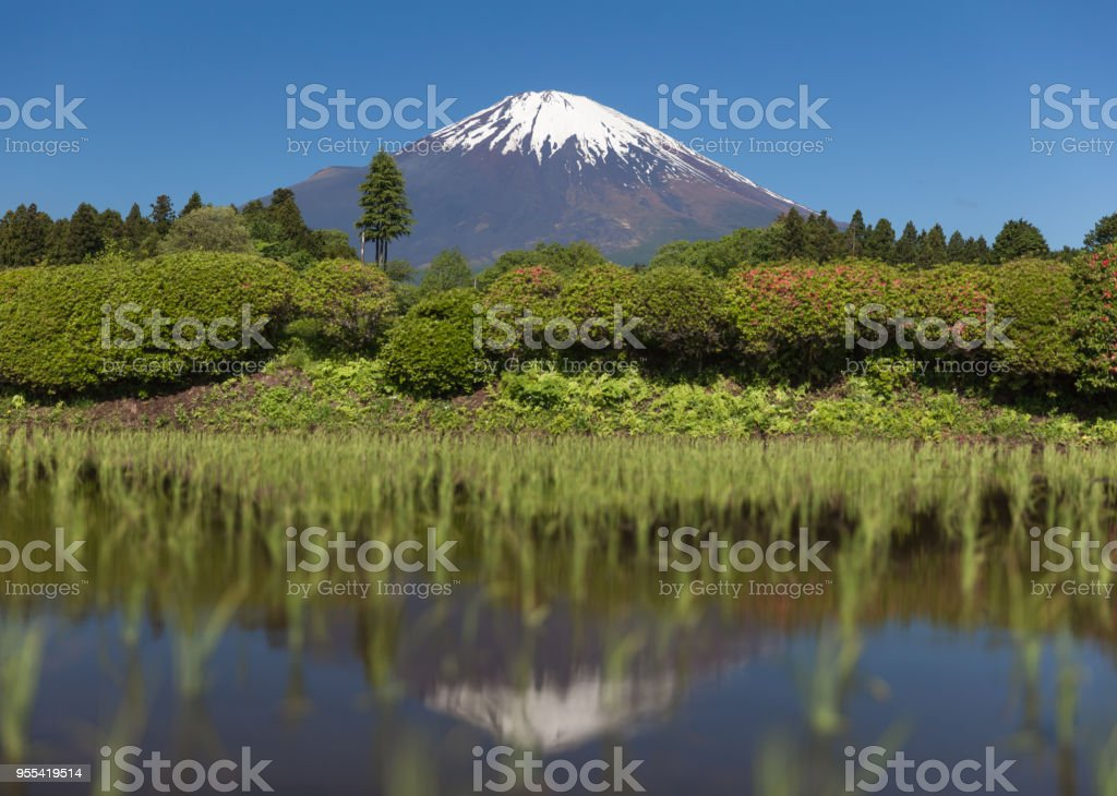 Mount Fuji and rice field in spring season - Zbiór zdjęć royalty-free (Bez ludzi)