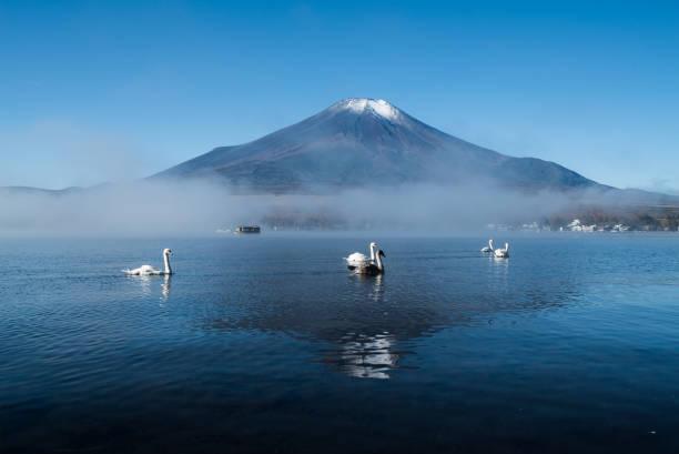 富士山と白鳥 - yamanaka lake ストックフォトと画像