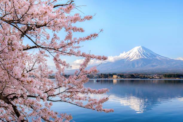 mount fuji på sjön kawaguchiko med körsbärsblommor i yamanashi nära tokyo, japan. - japan bildbanksfoton och bilder