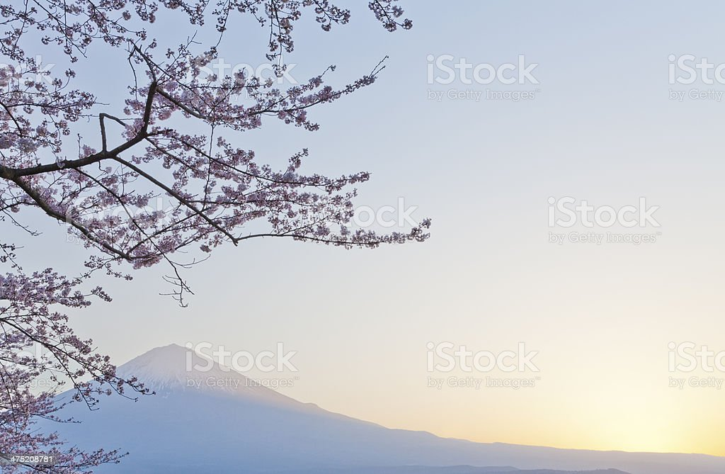 Mount Fuji & Cherry Blossoms royalty-free stock photo