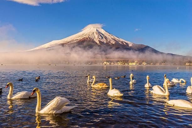 富士山ます。 - yamanaka lake ストックフォトと画像