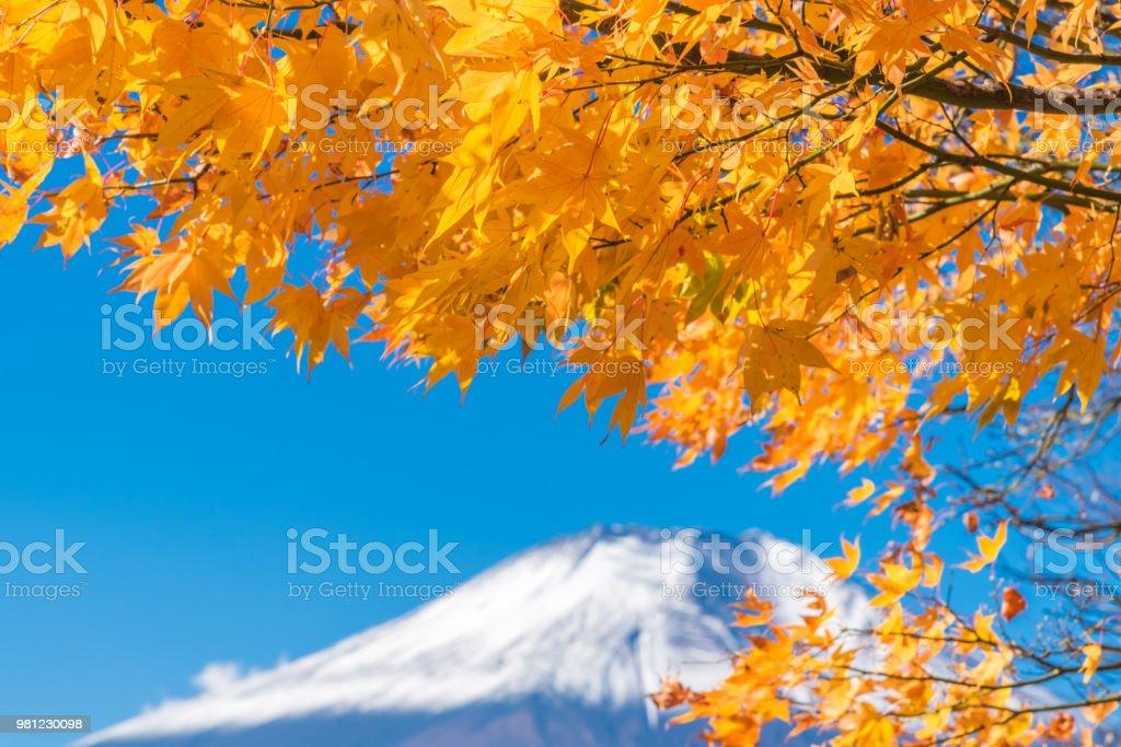 Mount Fuji scenery of maple leaves changing in autumn season at Lake Kawaguchi Japan Mount Fuji scenery of maple leaves changing in autumn season at Lake Kawaguchi Japan Asia Stock Photo