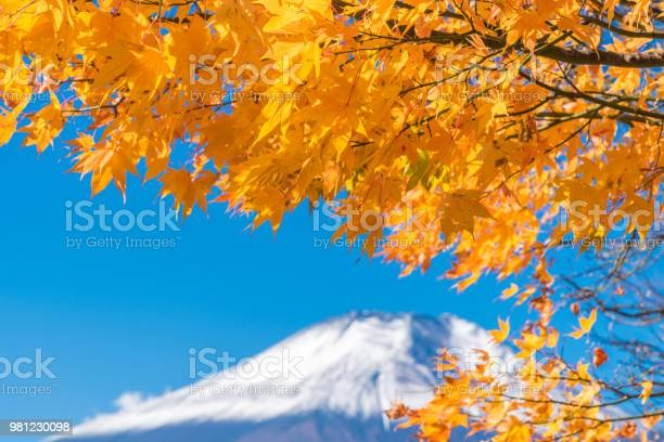 Mount Fuji Scenery Of Maple Leaves Changing In Autumn Season At Lake Kawaguchi Japan Stock Photo - Download Image Now