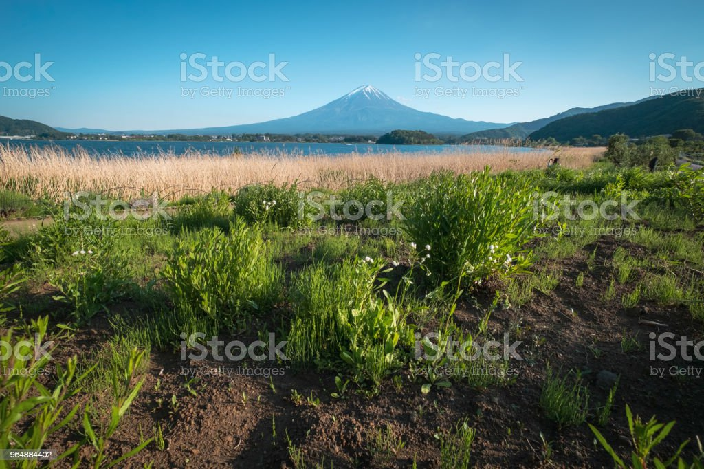 Mount Fuji with Grass Field royalty-free stock photo