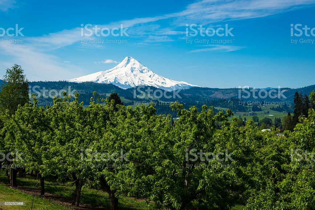 Mount Hood and apple orchards in Oregon stock photo