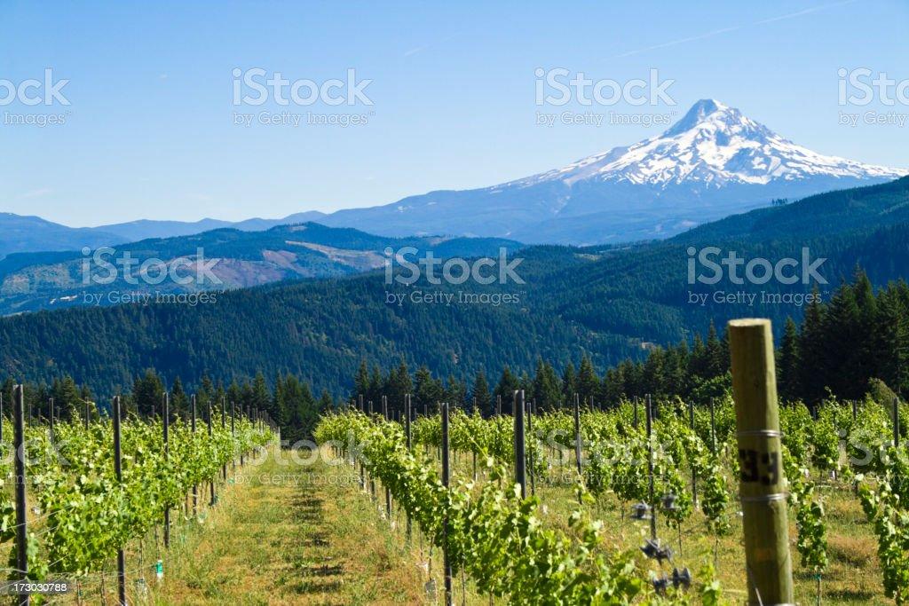 Mount Hood Harvest royalty-free stock photo