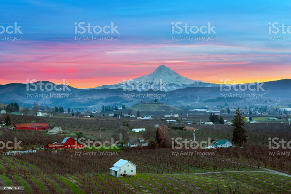 Mount Hood over Hood River Valley Orchard Farmland during Sunset stock photo