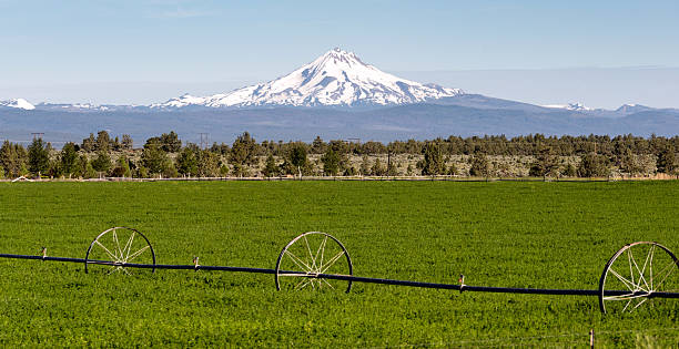 mount jefferson stands majestic oregon cascade mountain range - native american reservation stock photos and pictures