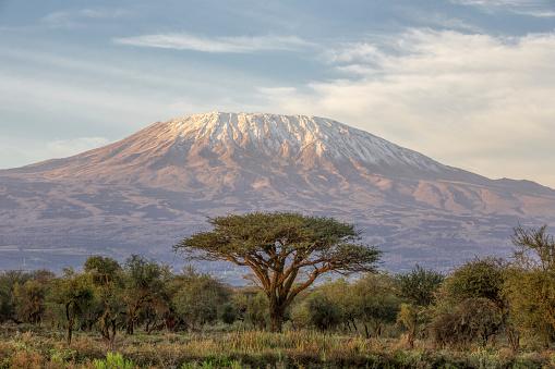 Mt Kilimanjaro and Acacia - in the morning - The classic view of Mt Kilimanjaro in Tanzania from Amboseli in Kenya