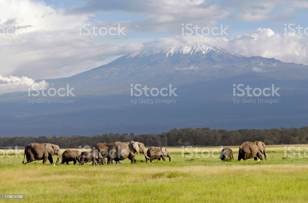 Mount Kilimanjaro royalty-free stock photo
