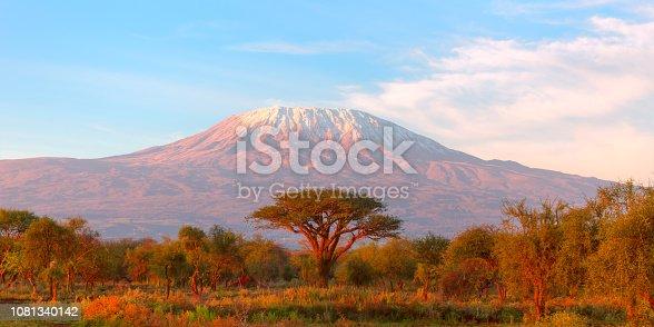 Mount Kilimanjaro with Acacia