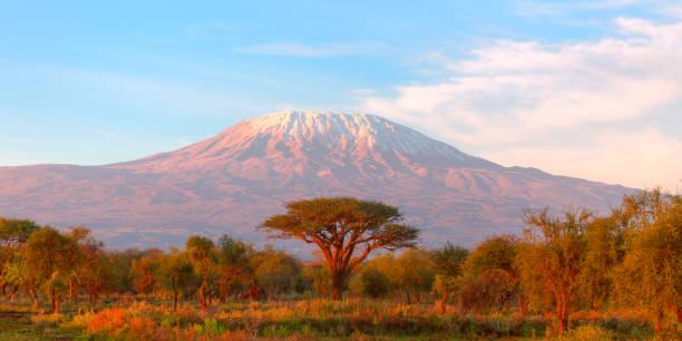 Mount Kilimanjaro with Acacia Mount Kilimanjaro with Acacia tanzania stock pictures, royalty-free photos & images