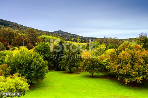 istock Mount Lofty botanic garden in Autumn 1209874189