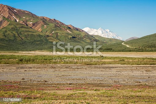 A peak a boo view of Mount McKinley across the fireweed peppered Toklat River gravel bars early one morning on a perfectly clear summer day on the Denali Park Road. Denali National Park, Alaska.