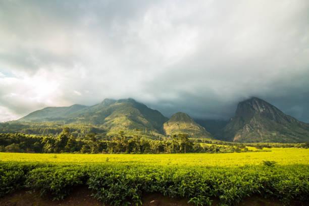 Mount Mulanje with tea plantation landscape. stock photo