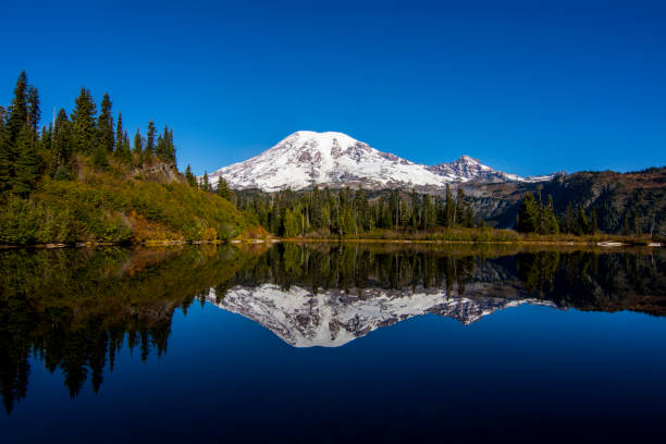 Mount Rainier and Lake Reflection Reflection of Mount Rainier in Bench Lake, Washington, USA mt rainier stock pictures, royalty-free photos & images