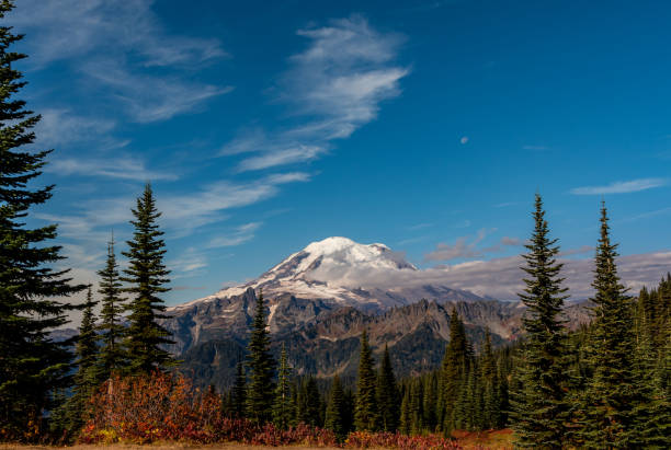 Mount Rainier Below Blue Sky with Pine Trees Mount Rainier Below Blue Sky with Pine Trees and Smaller Mountains Below mt rainier stock pictures, royalty-free photos & images
