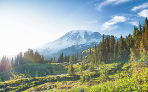 Mount Rainier in Summer Skyline Trail, Panorama Point mt rainier stock pictures, royalty-free photos & images