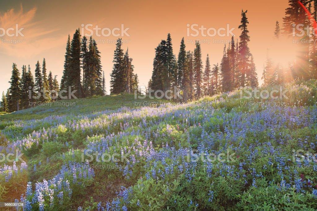 Mount Rainier in Summer - Royalty-free Alberta Stock Photo