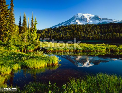Mount Rainier sits in the background with the calm waters of a pond.