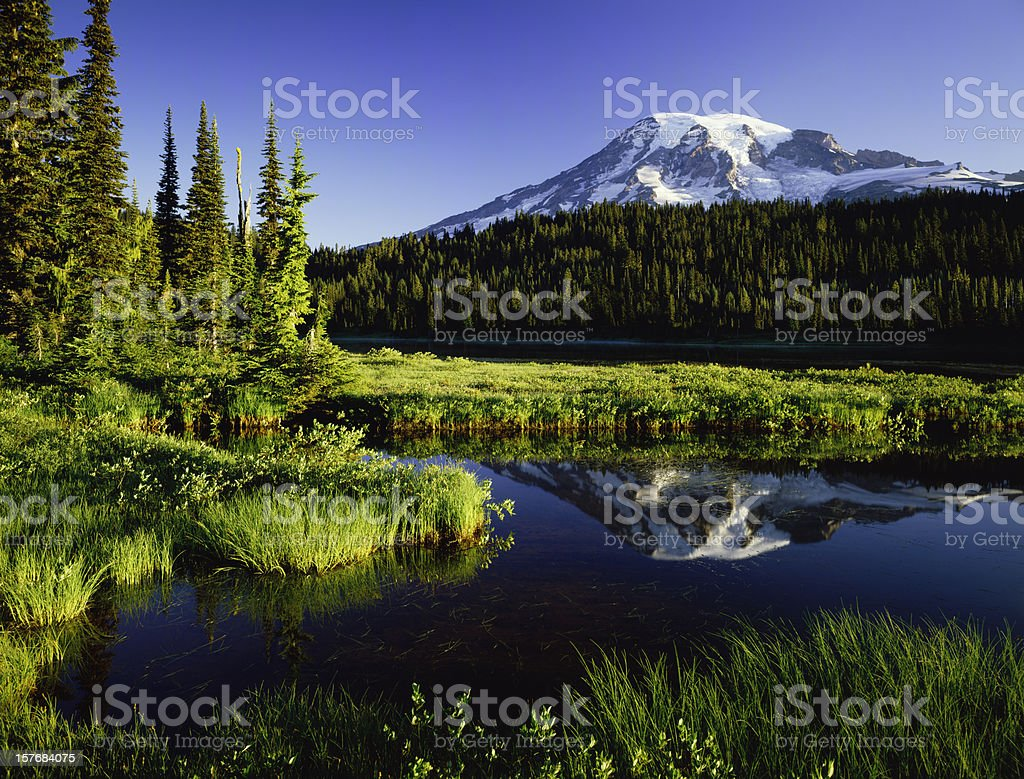 Mount. Rainier National Park stock photo