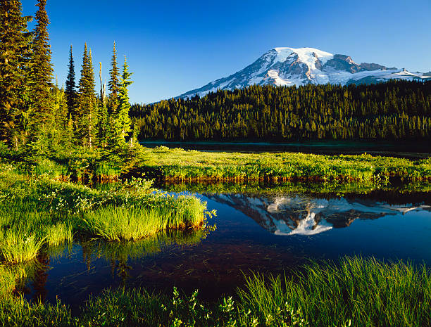 Mount. Rainier National Park Mount Rainier sits in the background with the calm waters of a pond. mt rainier stock pictures, royalty-free photos & images