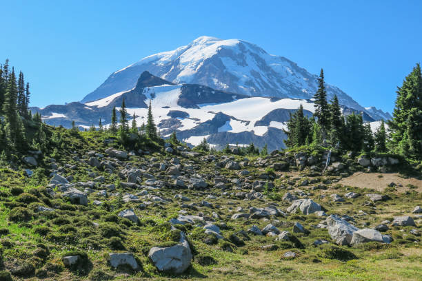 Monte Rainier, visto do Spray Trail Mount Rainier National Park - foto de acervo