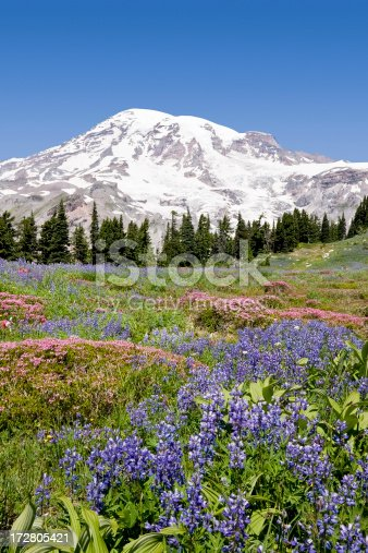Mount Rainier in Washington State while the wild flowers are in bloom.