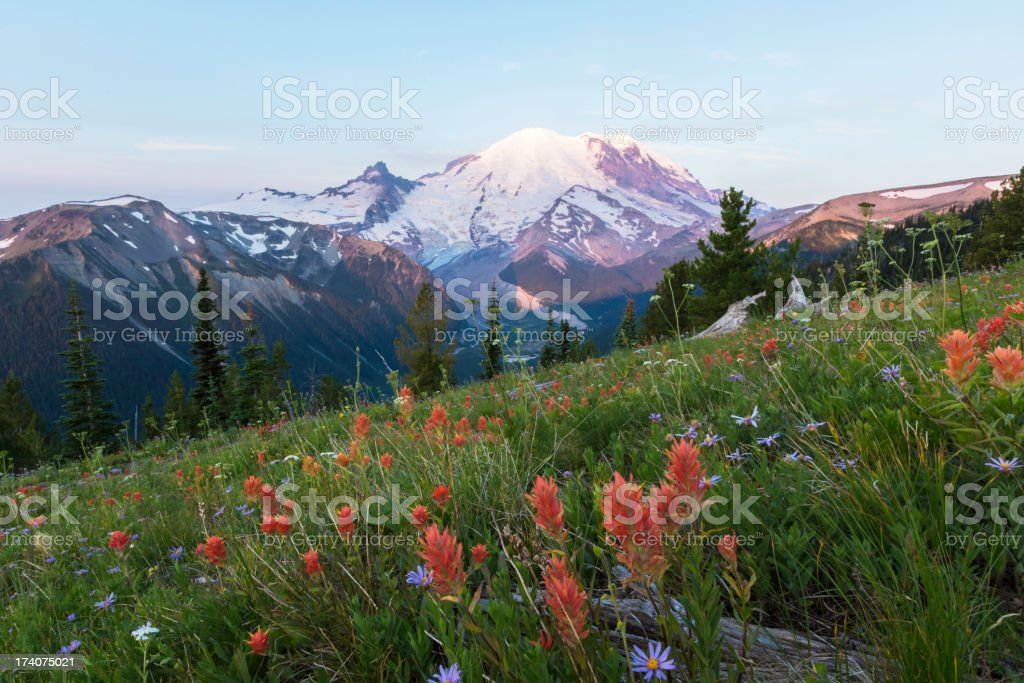 Mount Rainier Wildflowers Sunrise royalty-free stock photo