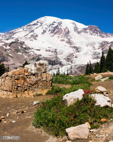 A view of Mount Rainier on a clear blue day with a patch of wildflowers and a large rock in the foreground.
