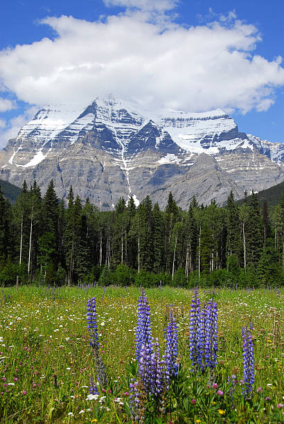 Mount Robson, Mount Robson Provincial Park,British Columbia,Canada stock photo
