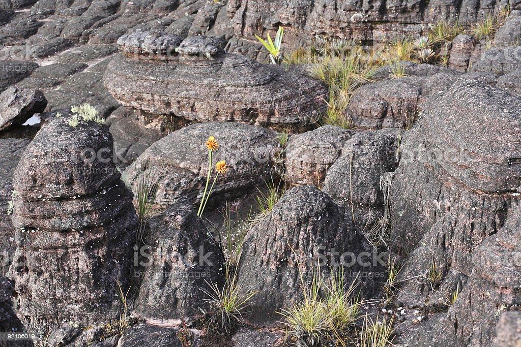 Mount Roraima landscape royalty-free stock photo