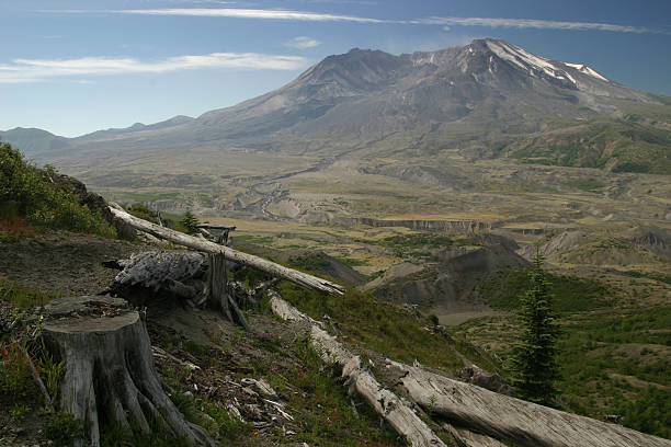 Mount Saint Helens With Fallen Logs in the Foreground stock photo