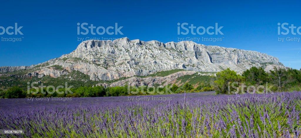 Mount  sainte Victoire and lavender stock photo